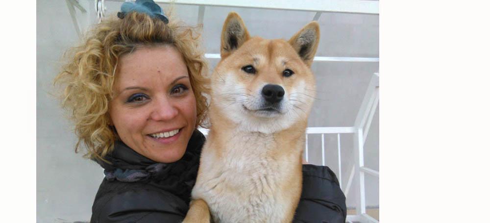 shiba inu kennels kennel puppy puppies
